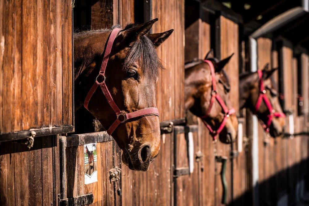 curiozități despre cai