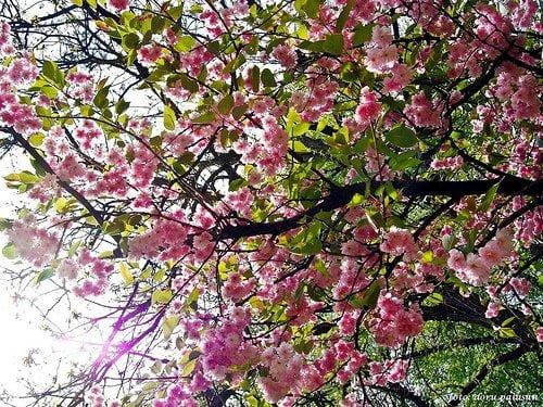 judeţulHunedoara primăvarav